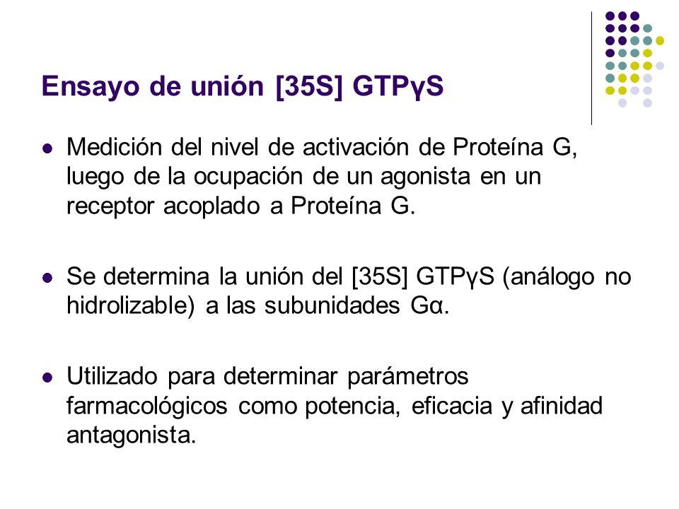 Ensayo de unión [35S] GTPγS